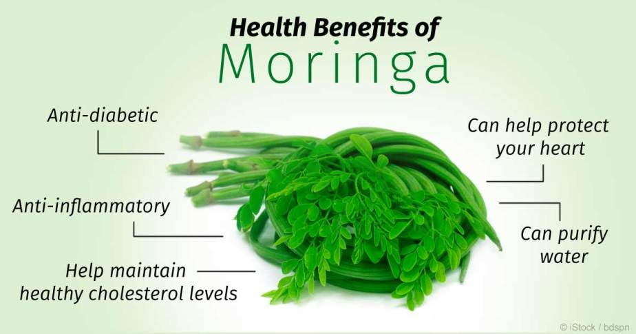 MORINGA TO THE RESCUE!!