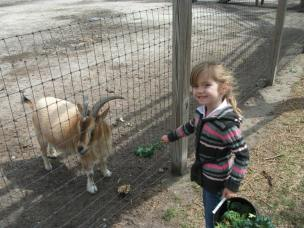 Ember feeds the goat