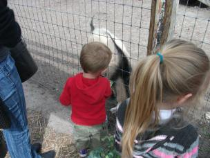 Ember & Miles feed the goat