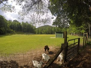enota farm animals 2