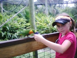 Shay feeding Lorikeet
