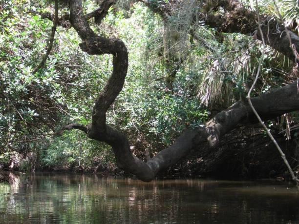 tree limb closer
