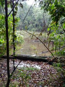 64 the pond